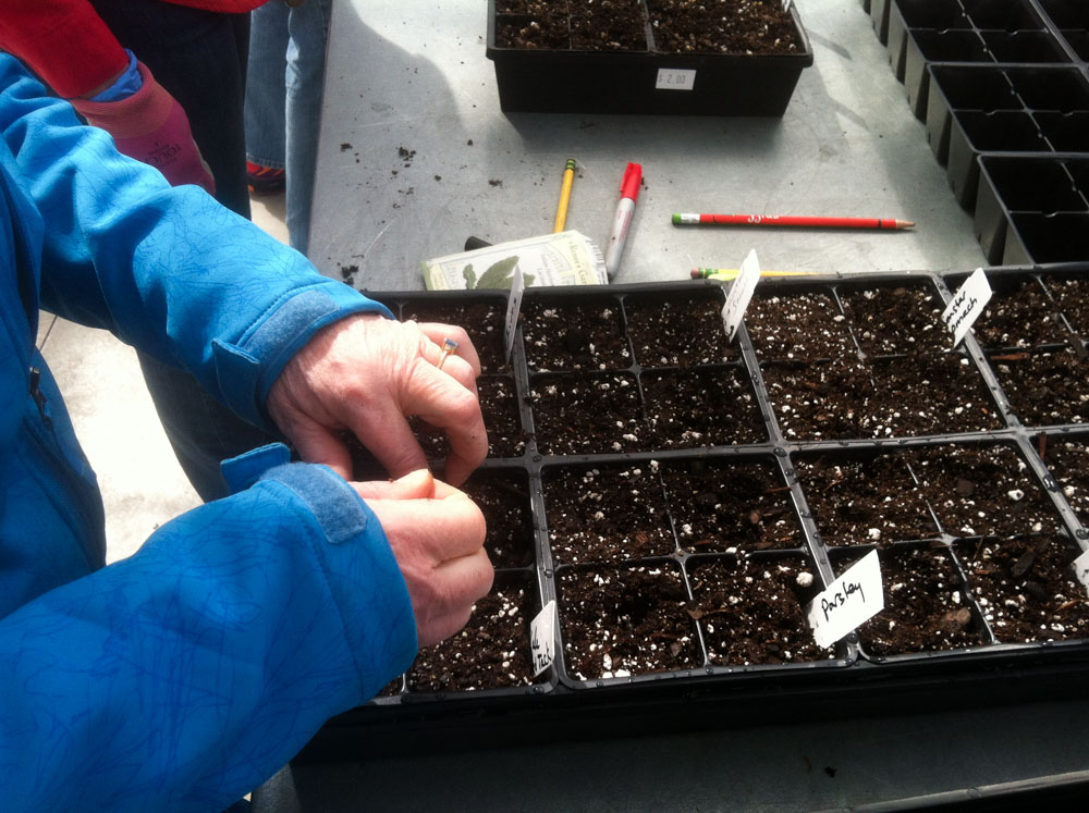 A Great Time to Get Some Seeds Started