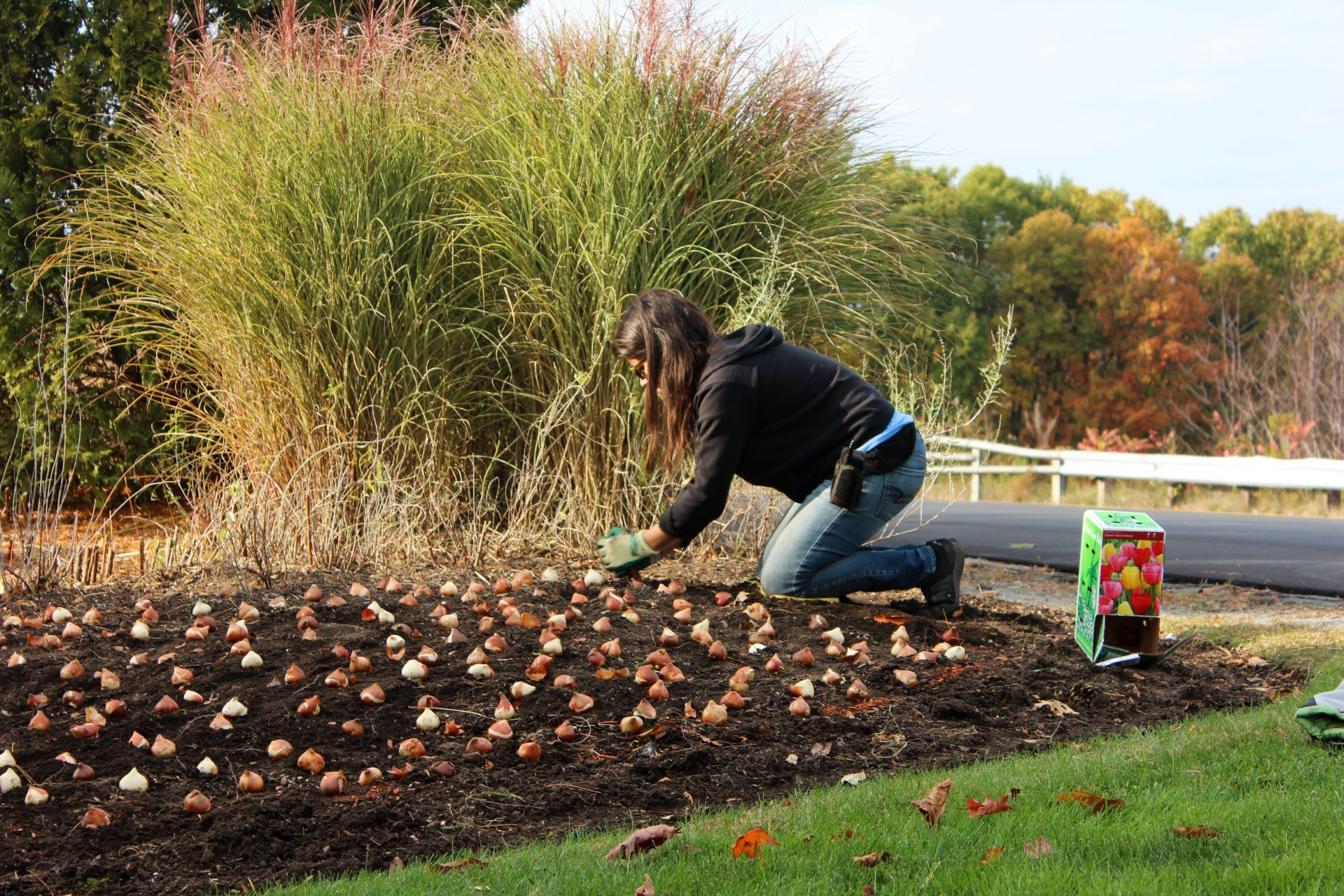 Fall is STILL for Planting!